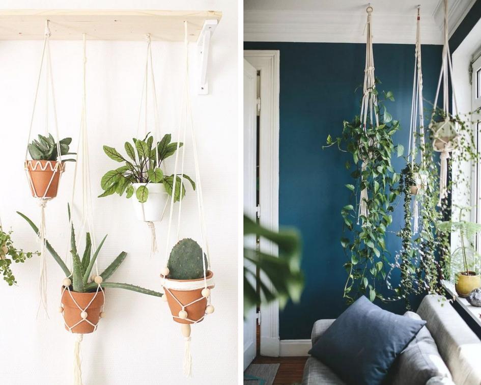 Jardin suspendu - Plantes - Davis&Co