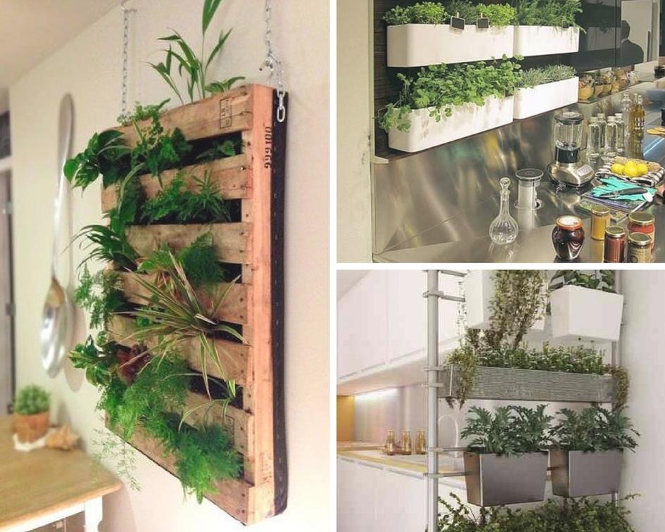 Murs végétaux - Plantes - Davis&Co