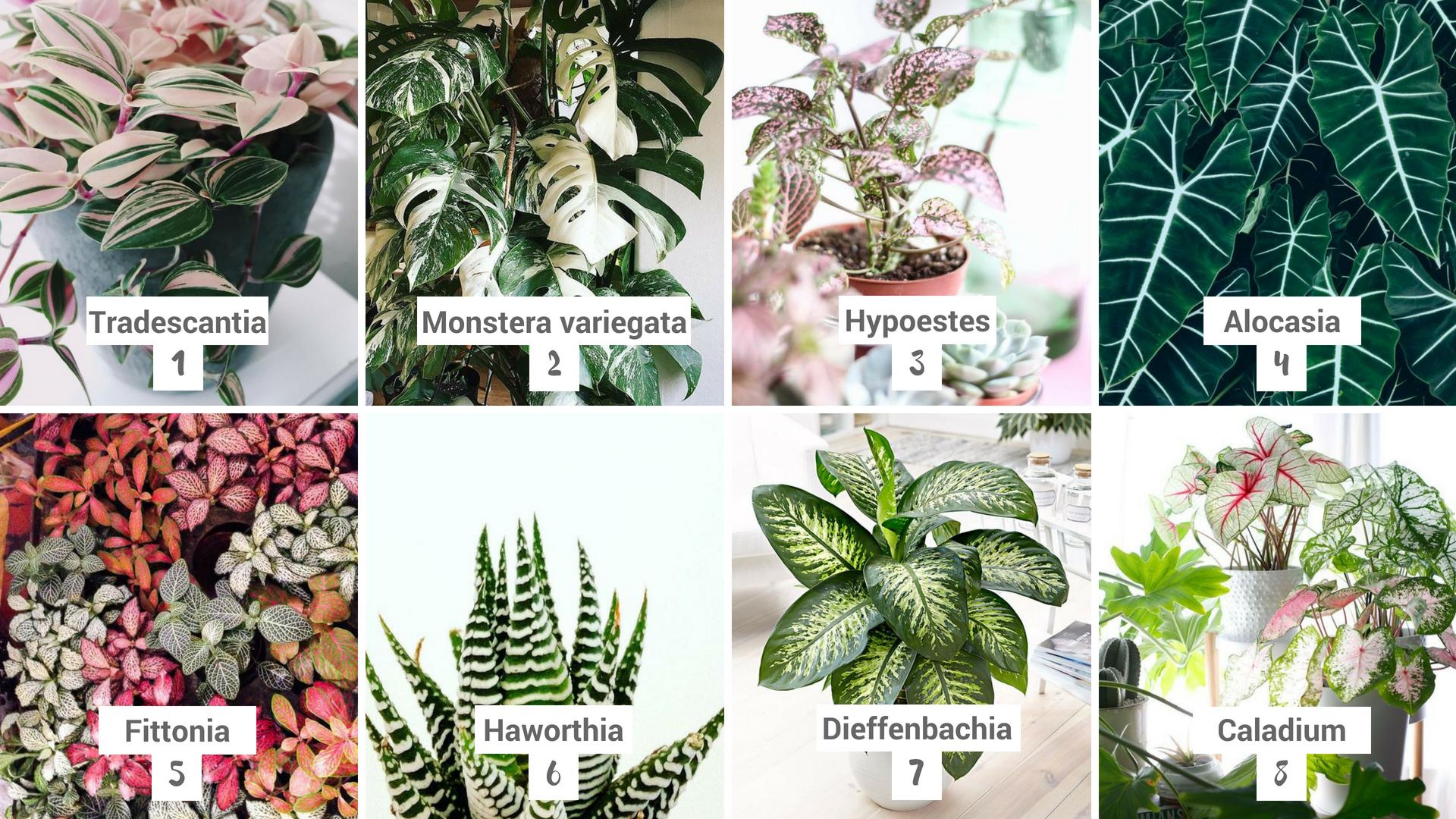 Plantes - Tendances 2018