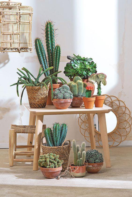 Cactus - Plantes