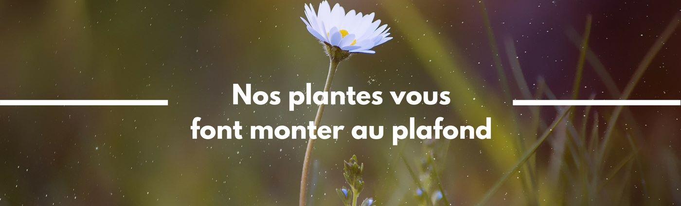 Plantes - Davis&Co